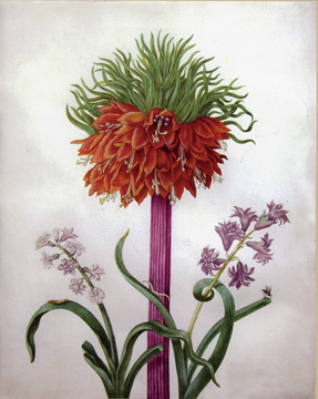 """Study of a fritillaria imperialis"" by Graffe"