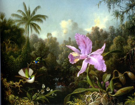 """Orchid and Two Hummingbirds"" by Heade"