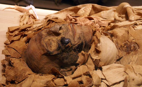 Mummified Head of Neskhons