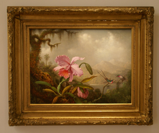 Orchid by Martin J. Heade