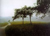 """Apple Orchard"" by Gerhard Richter"