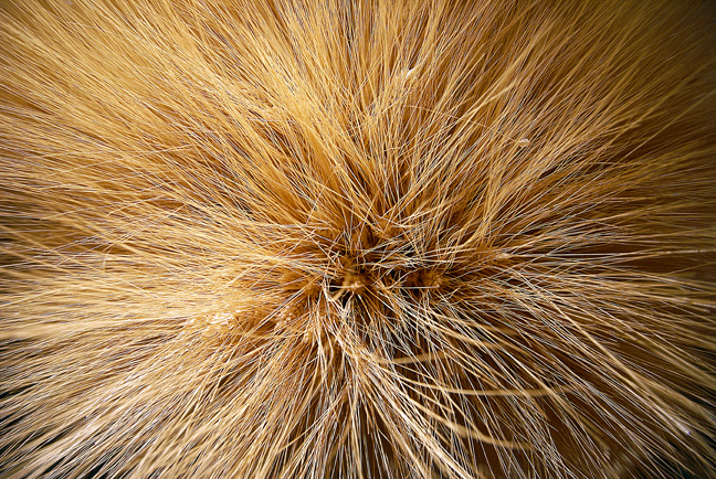 Detail of straw pompom